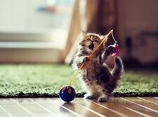 4Pack Cat Cats Kitten Kittens Spring Stationery Greeting Notecards / Envelopes 8