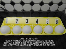6 pack SOLWAY PHESANT EGGS training/nesting/hatching/game bird/crafts/dummy/fake