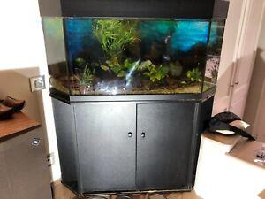 Aquarium d'angle juwel 190l