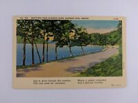 Postcard Linen Greetings from McKenzie River Pass Oregon Road Nature