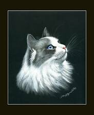 Ragdoll Cat Noble Print by I Garmashova