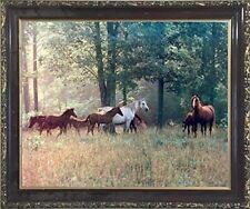 Horses in Pasture Animal Wildlife Wall Decor Mahogany Framed Art Print Picture