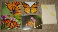 LOT OF 4 MONARCH BUTTERFLY NOTE CARDS FROM ENVIRONMENTAL DEFENSE FUND, NEW