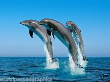 LARGE Dolphin #2 RV or Trailer Mural Motorhome Decal Decals Graphics Sticker