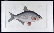 1782 BLOCH Cyprinus Blicca – Die Güster – La Bordeliere (modern: Abramis bjo #10