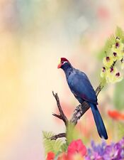 METAL REFRIGERATOR MAGNET Ross's Turaco aka Lady Ross's Turaco Bird Blue Red