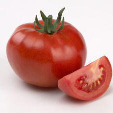 TOMATO Scoresby Dwarf Heirloom Seeds (V 207)