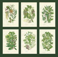 SET OF 6 X ORIGINAL 1880 ANNE PRATT FLOWERS FERN PRINTS CHROMOLITHOGRAPHS 3-8