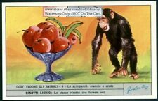 What A Chimpanzee Sees Vision And Eyes c40 Y/O Trade Ad Card