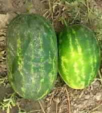 100 Watermelon Seeds CalSweet Melon Seeds Cal sweet