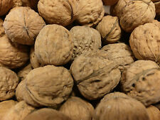 5 Pounds In Shell English Walnuts