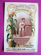 Chromo CHOCOLAT poulain 1900-1910 Les plantes utiles  Canne a Sucre
