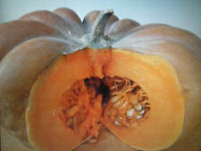 ZUCCA Musquèe de Provence ARANCIONE GRANDE A COSTE ORANGE PUMPKIN, ORIGINALE