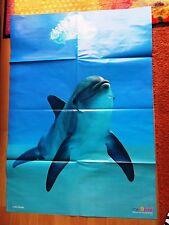 84x59 Poster + Grosser TÜMMLER DELFIN Delphin MEER Säuger Kinder MEDIZINI 72017