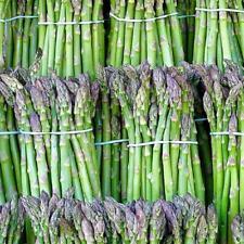 légumes asperge précoce d'Argenteuil environ 100 graines