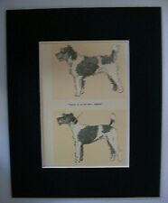 Terrier Grooming Comical Dog Print Cecil Aldin 1928 Bookplate 8x10 Matted