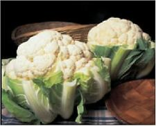 Vegetable - Cauliflower - Autumn Giant - 80 Seeds - Economy Pack