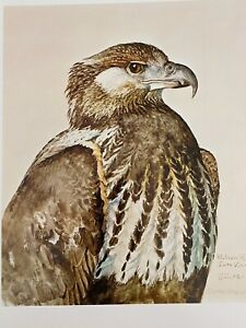 "Louis Agassiz Fuertes & The Singular Beauty of Birds, ""Fish Eagle"" Print"