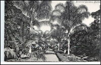 DURBAN Südafrika Afrika South Africa ~1910 Botanical Garden Botanik Park Garten