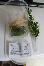 1Praying Mantis Starter Habitat Kit new crystal clear Incubator With Vent lids