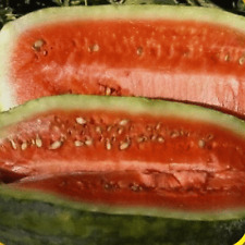 40 Congo Watermelon Seeds - Everwilde Farms Mylar Seed Packet