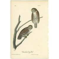 Audubon Octavo 1st Ed 1840 hand-colored lithograph Pl 30 Columbian Day - Owl