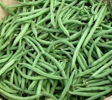 Bush bean Blue lake 274- (25 seeds) * Heirloom * Non GMO * CombSH K26