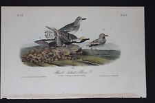 AUDUBON'S BIRDS of AMERICA - BLACK BELLIED PLOVER - First Edition Octavo #315