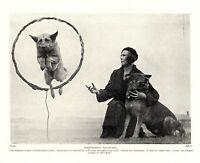 1930s Antique German Shepherd Dog Print Coona Jumping Through Hoop 3851f