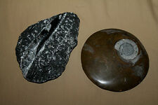 (2) Polished Rock Fossils from Bryce Canyon