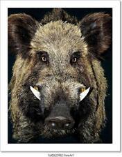Male Wild Boar Portrait Art/Canvas Print. Poster, Wall Art, Home Decor