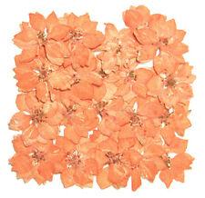 Fleurs séchées, Orange Larkspur, 20pcs Fabrication Carte Artisanat Art matériaux