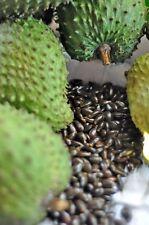 12 Soursop Guanabana Graviola Guyabano Annona Muricata Fresh Seeds Tropical