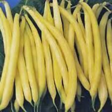 Golden Wax Bean, Bush Bean, NON Gmo,organic 20+ Seeds, Great Tasting and Healthy