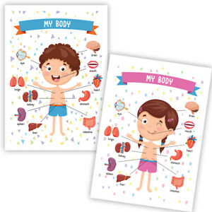 The Human Body Boy Girl Children Clean Home School Learning Educational Poster