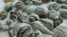 50 Edible Sugar Icing Sea Shells Beach Themed Cupcakes Toppers Cake Decorations