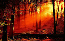 """Light Beaming Through Trees Canvas Pictures 16""""X20"""" Landscape Wall Art Prints"""