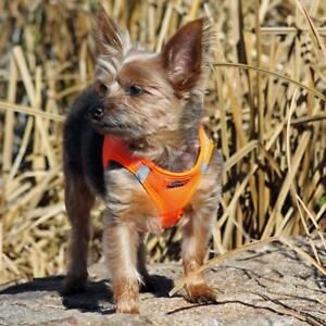 American River Hunter Orange Dog Harness Ultra Choke-Free Mesh  -  XXS-3XL