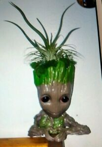 I AM GROOT PLANTER WITH AIRPLANTS...LAST ONE