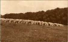 C39-8716, HERD OF SHEEP, ANTIQUE/VINTAGE POSTCARD.