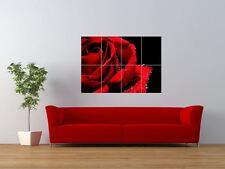 NATURE PLANT FLOWER ROSE RED ROMANTIC GIANT ART PRINT PANEL POSTER NOR0392
