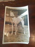 "Vintage Old Photo of Beautiful Dog ""Grey Bush"" Animal Picture 6 1/2 x 9 1/2"
