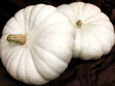 White Flat Boer Pumpkin Seeds  Comb S/H SEE MY STORE FOR OVER 900 RARE SEEDS!