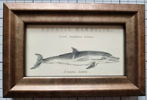1868 FRAMED DOLPHIN ANTIQUE ORIGINAL PRINT - SMALL SIZE - 215 YEARS OLD