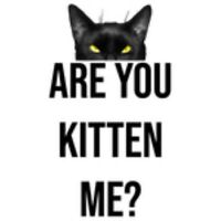 Are You Kitten Me? Cute Black Cat Question What?! Animal Pet Mysterious Awesome