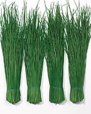 Herb Seeds - Chives Fine Leaved - 400 Seeds