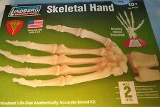 Skeletal Hand Model Kit Lindberg Science Skill Level 2
