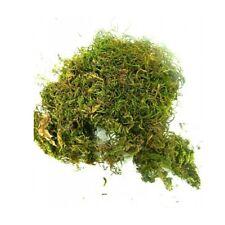 Busta Muschio +/- 60 Gr - Ottima Qualità Erba Pastori Vegetazione Presepe