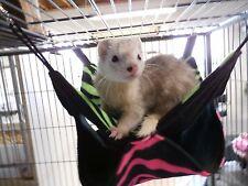 Sale! - Double Hammock Bunkbed Ferrets Chinchillas Rats Sugar Glider Female