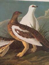 Rock Grous Audubon Bird Print Picture Plate 122